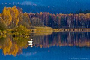 Podzimní Lipno