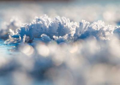 Ledové květy na Lipně