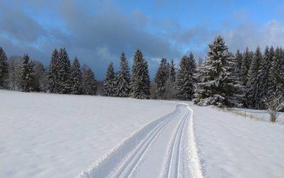 Běžkařské stopy v okolí Horní Plané